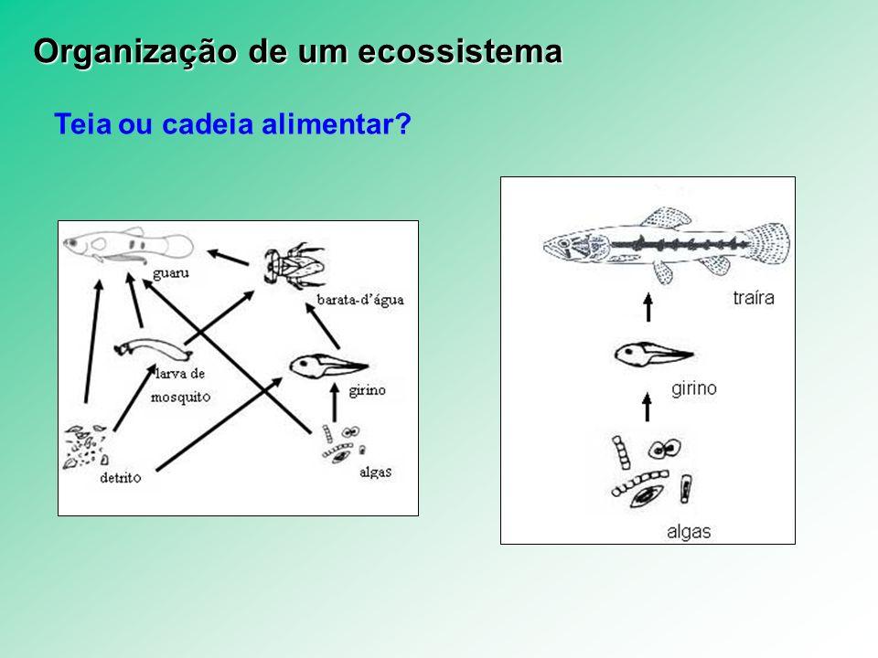 Organização de um ecossistema