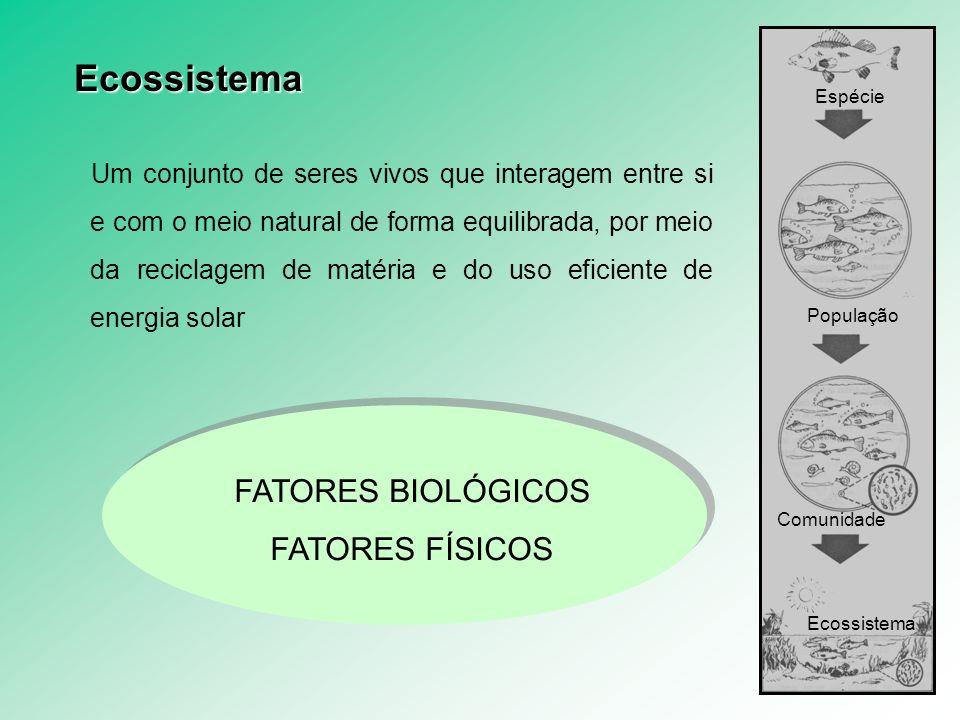 Ecossistema FATORES BIOLÓGICOS FATORES FÍSICOS