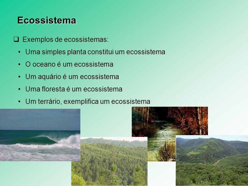 Ecossistema Exemplos de ecossistemas: