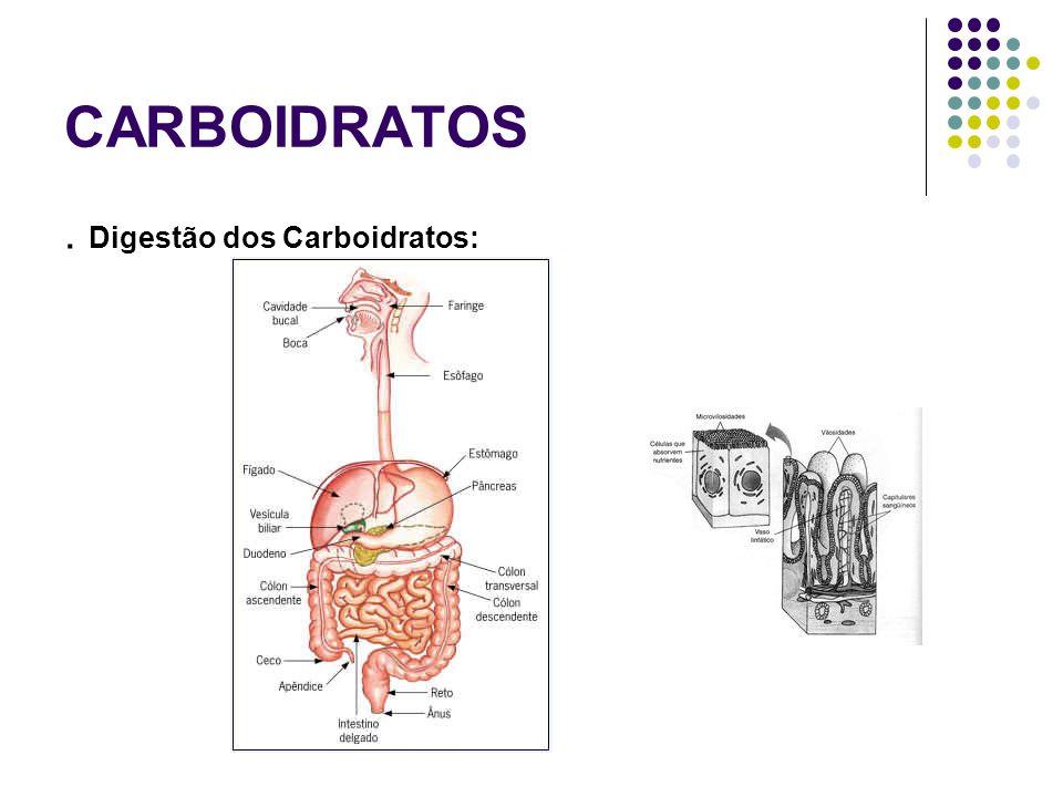 CARBOIDRATOS . Digestão dos Carboidratos: