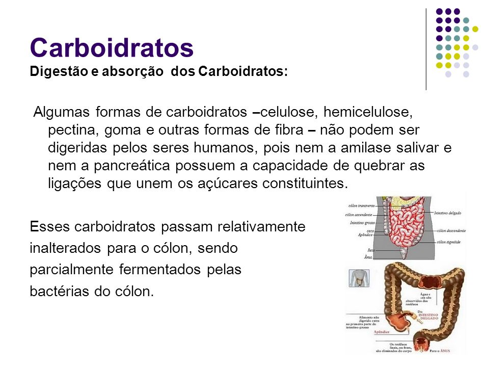 Carboidratos Esses carboidratos passam relativamente