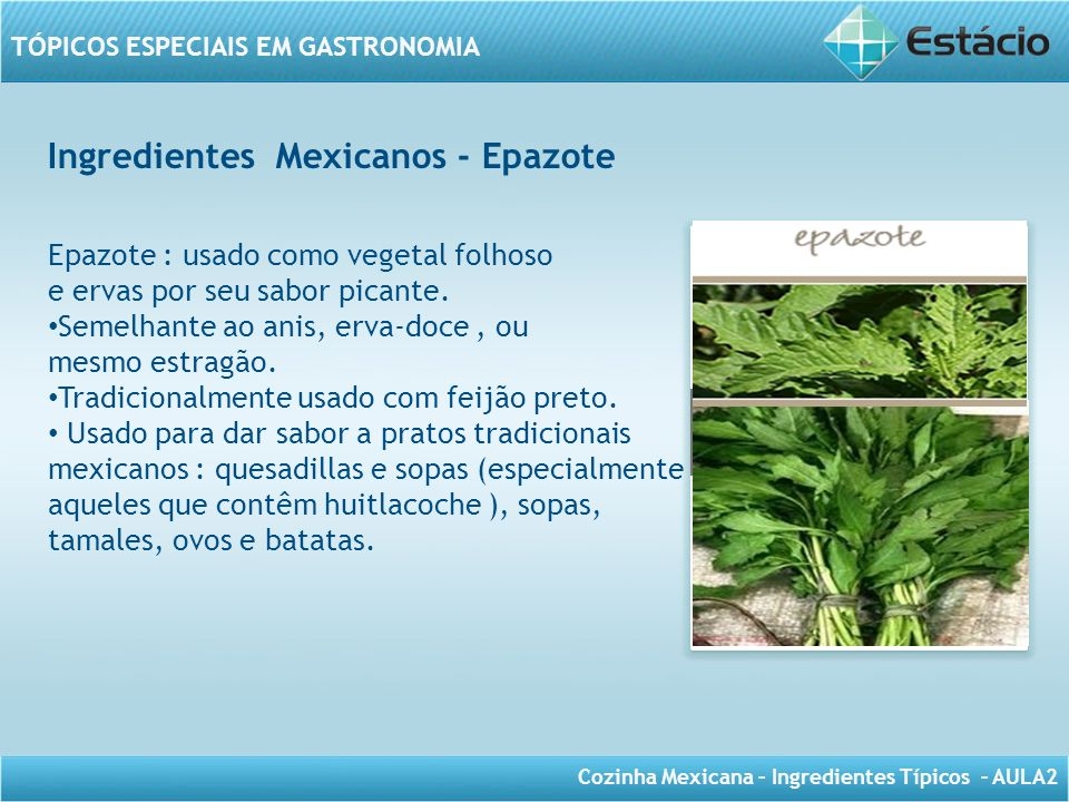 Ingredientes Mexicanos - Epazote