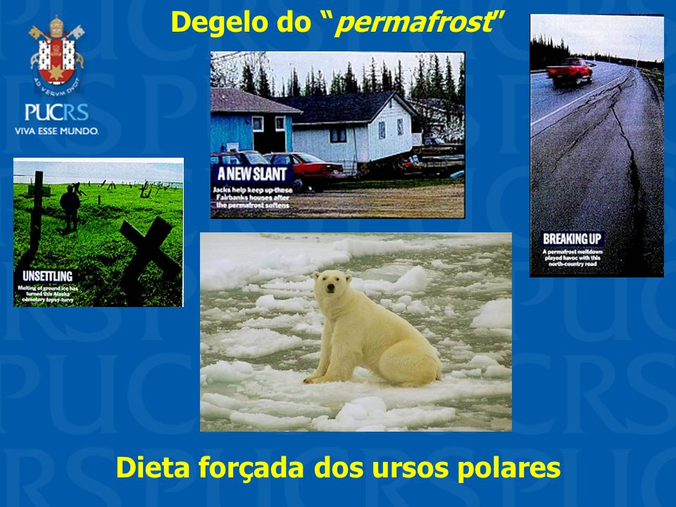 Degelo do permafrost Dieta forçada dos ursos polares