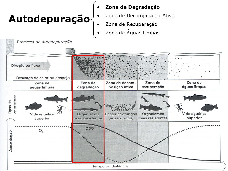Autodepuração Zona de Degradação Zona de Decomposição Ativa