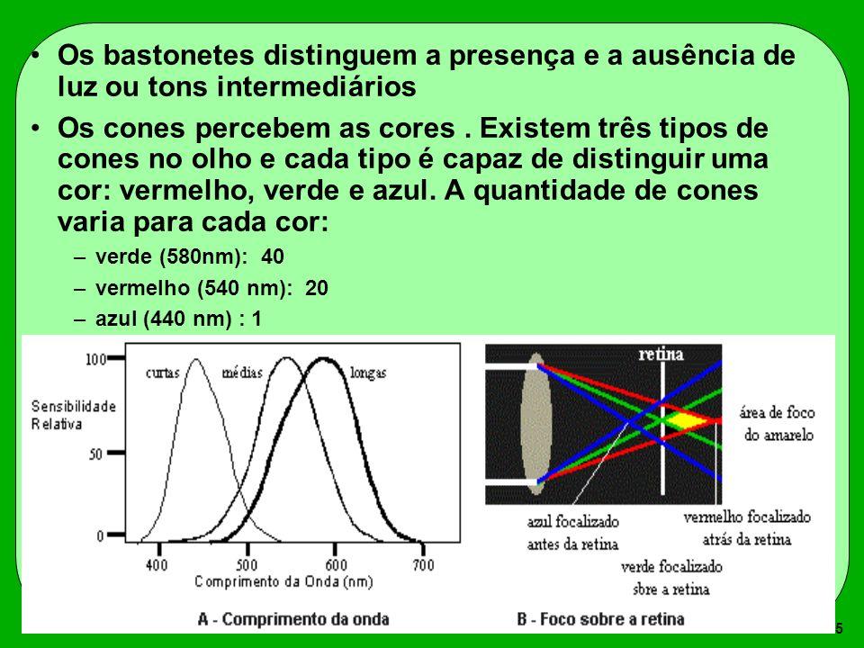 Os bastonetes distinguem a presença e a ausência de luz ou tons intermediários