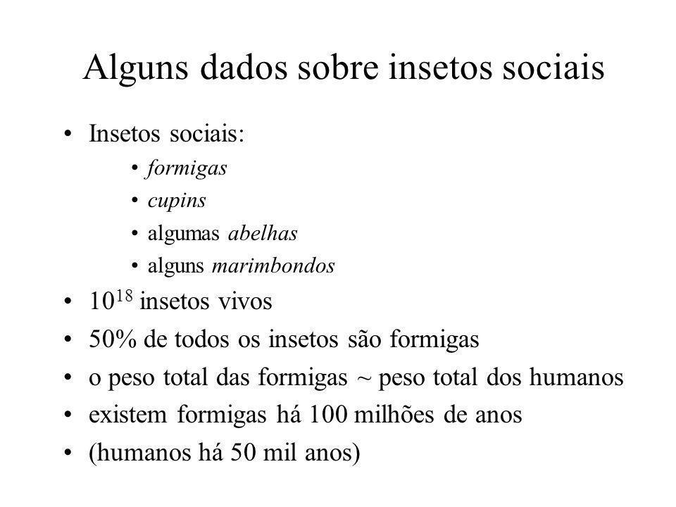Alguns dados sobre insetos sociais