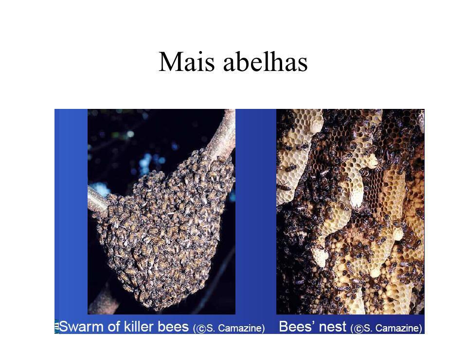 Mais abelhas