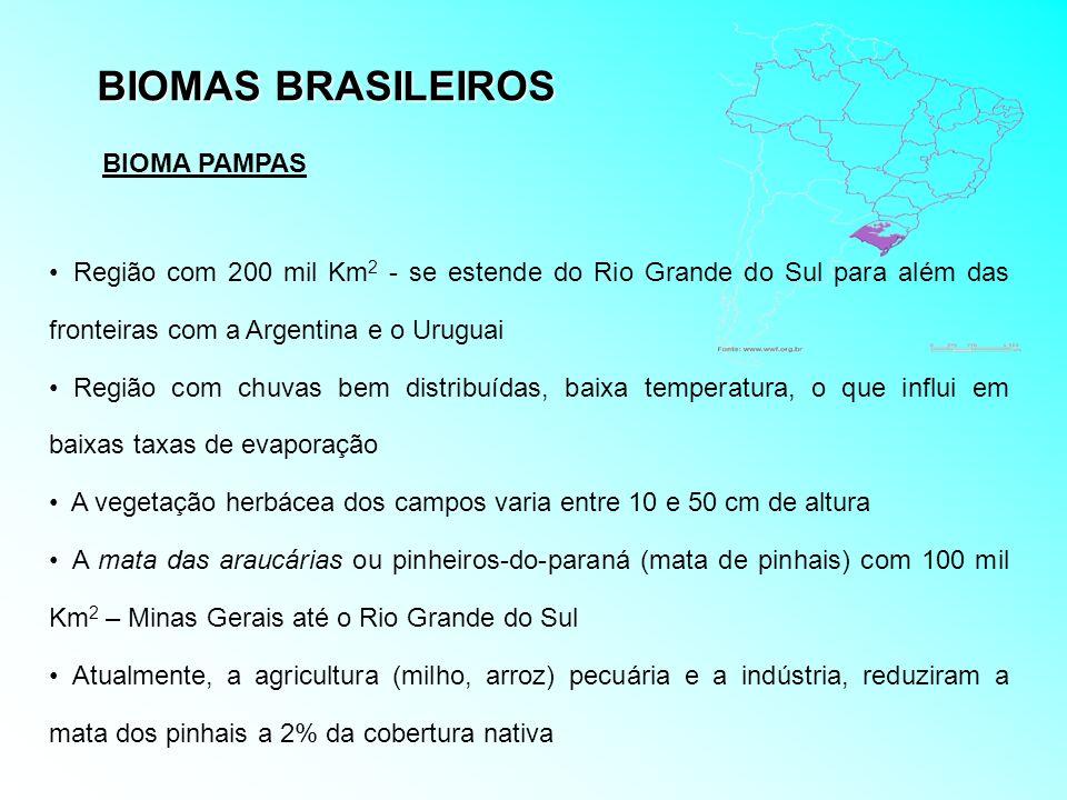 BIOMAS BRASILEIROS BIOMA PAMPAS