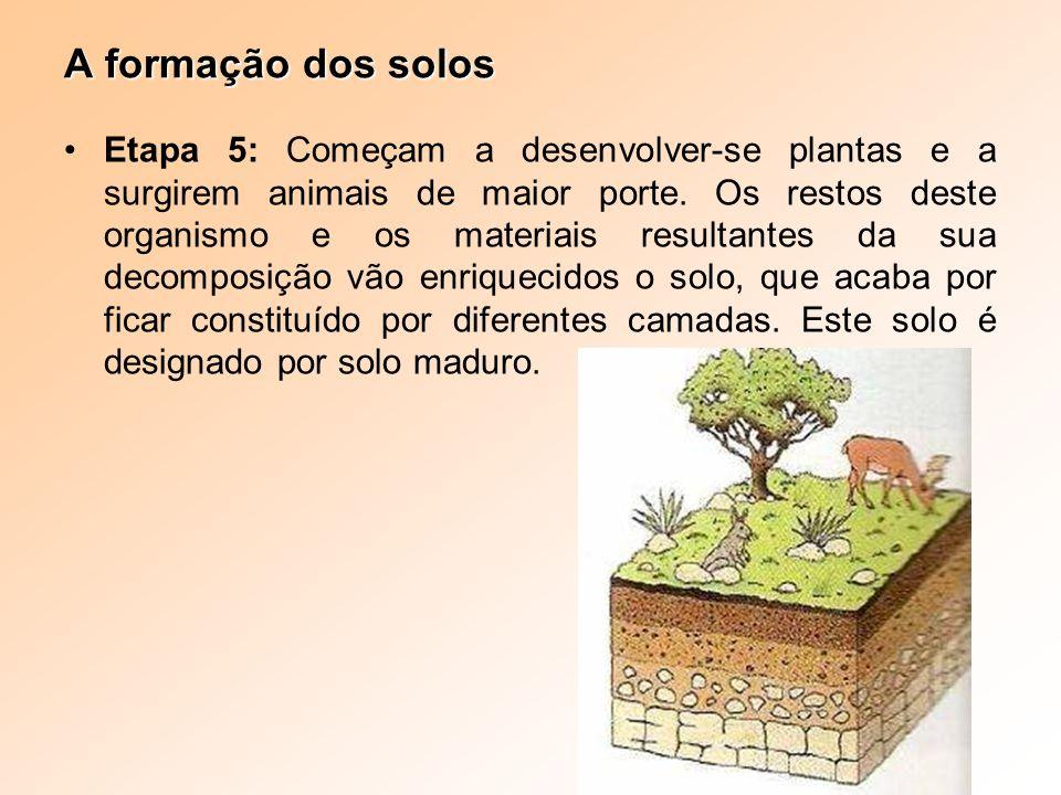 A formação dos solos