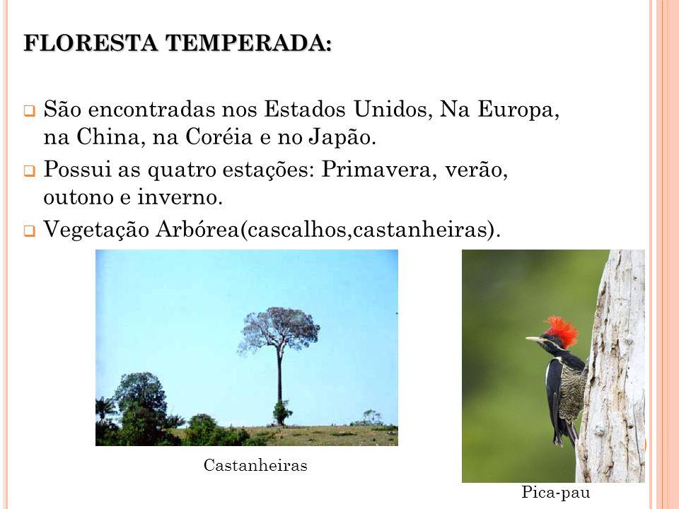 Possui as quatro estações: Primavera, verão, outono e inverno.