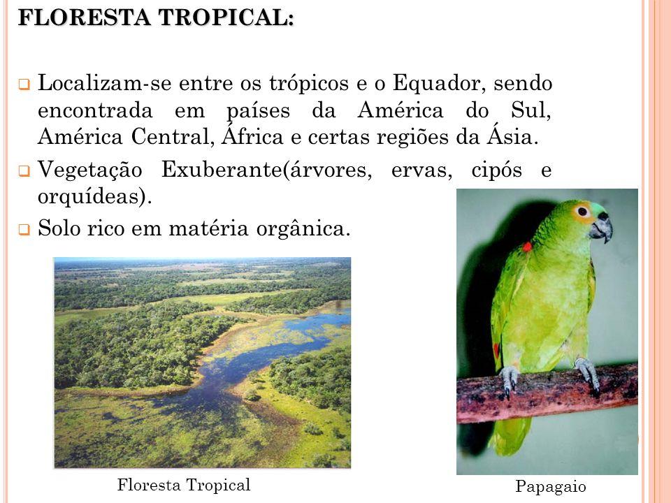 Vegetação Exuberante(árvores, ervas, cipós e orquídeas).