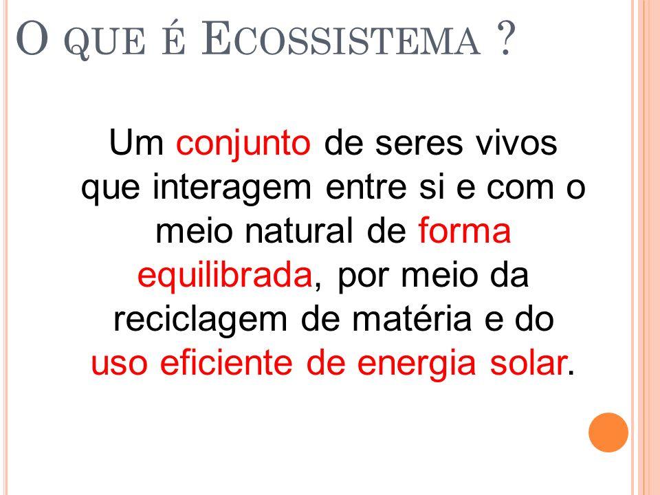 O que é Ecossistema
