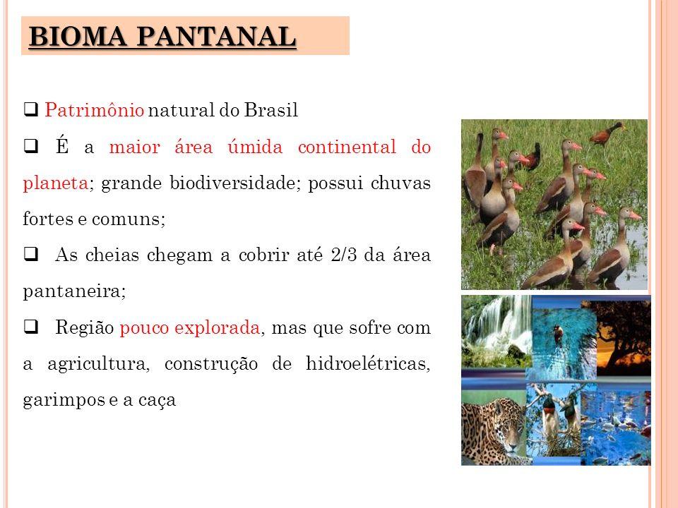 BIOMA PANTANAL Patrimônio natural do Brasil