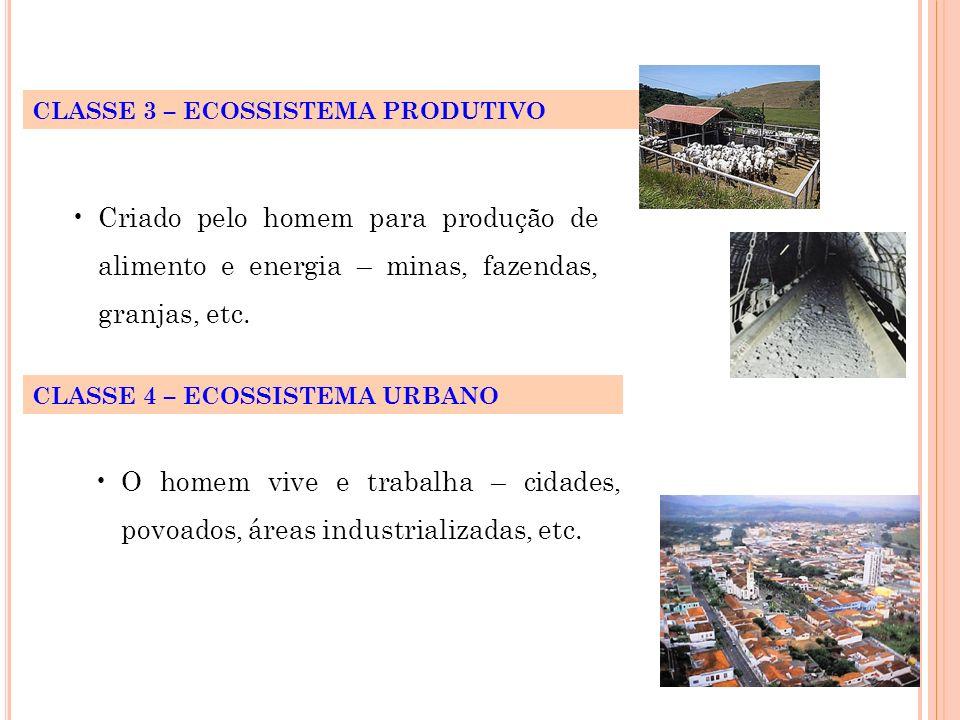 CLASSE 3 – ECOSSISTEMA PRODUTIVO