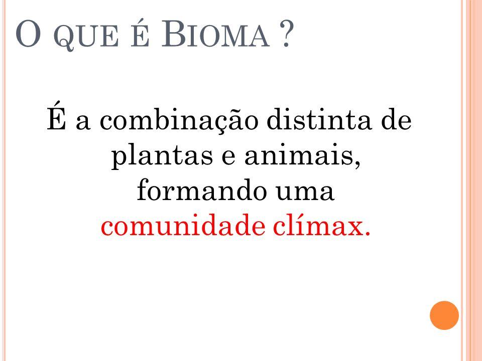 O que é Bioma É a combinação distinta de plantas e animais, formando uma comunidade clímax.