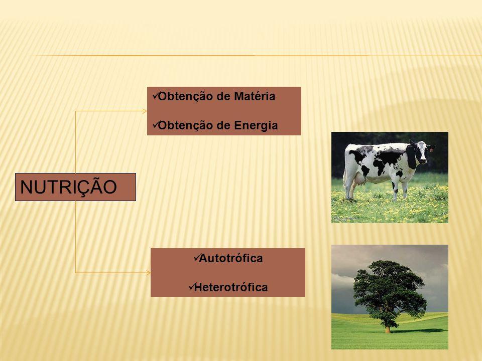 NUTRIÇÃO Obtenção de Matéria Obtenção de Energia Autotrófica