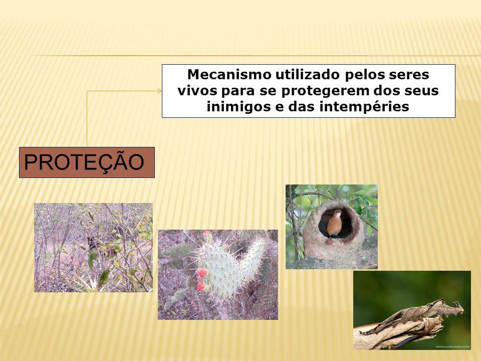 Mecanismo utilizado pelos seres vivos para se protegerem dos seus inimigos e das intempéries