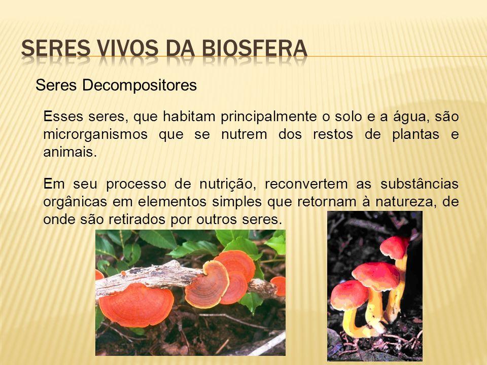 Seres vivos da biosfera