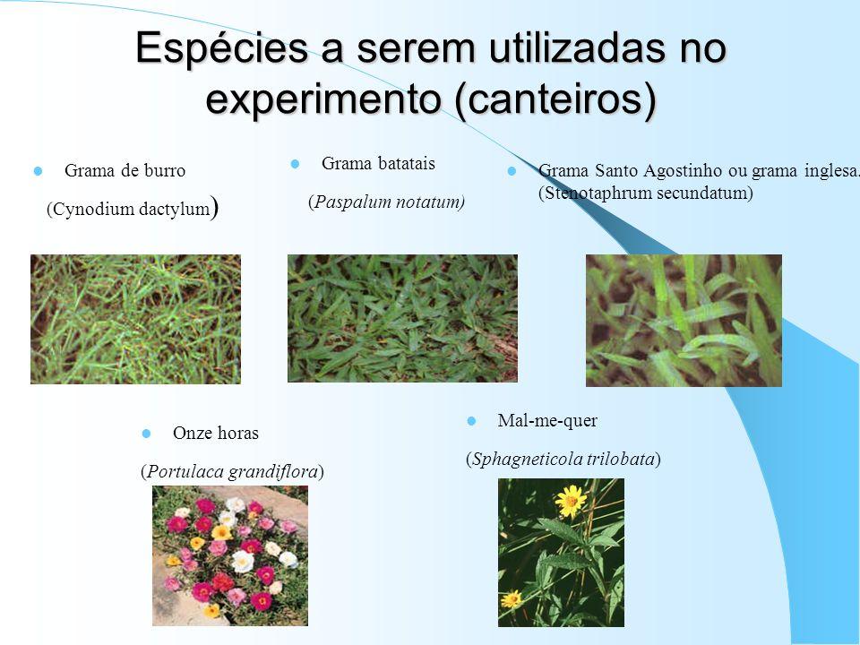 Espécies a serem utilizadas no experimento (canteiros)