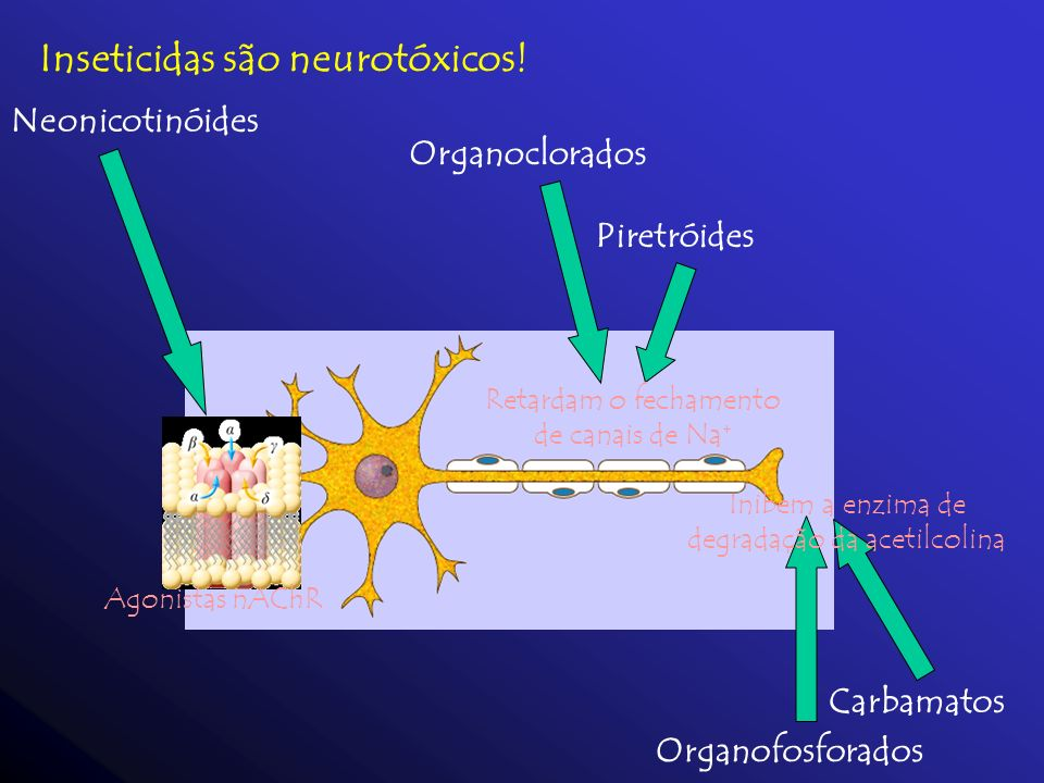 Inseticidas são neurotóxicos!