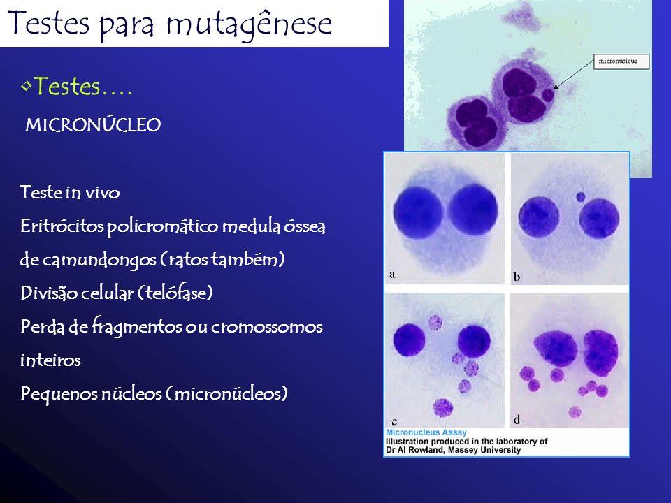 Testes para mutagênese
