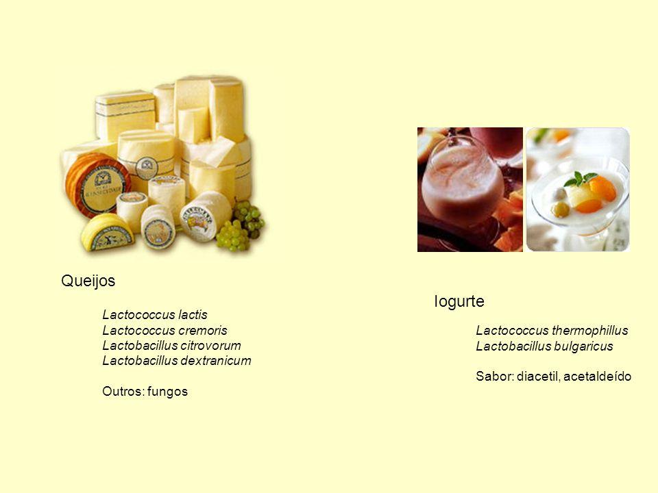 Queijos Iogurte Lactococcus lactis Lactococcus cremoris