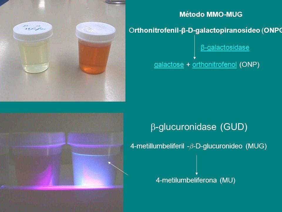 -glucuronidase (GUD)