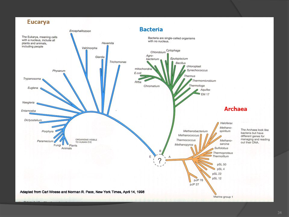 Eucarya Bacteria Archaea