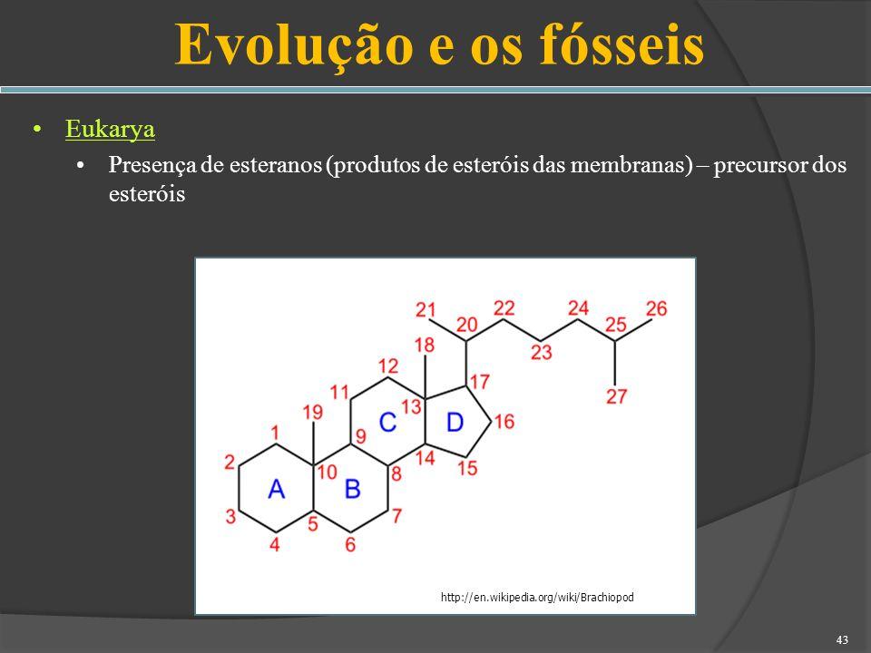 Evolução e os fósseis Eukarya