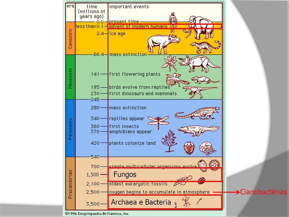 1,500 Fungos Cianobactérias Archaea e Bacteria