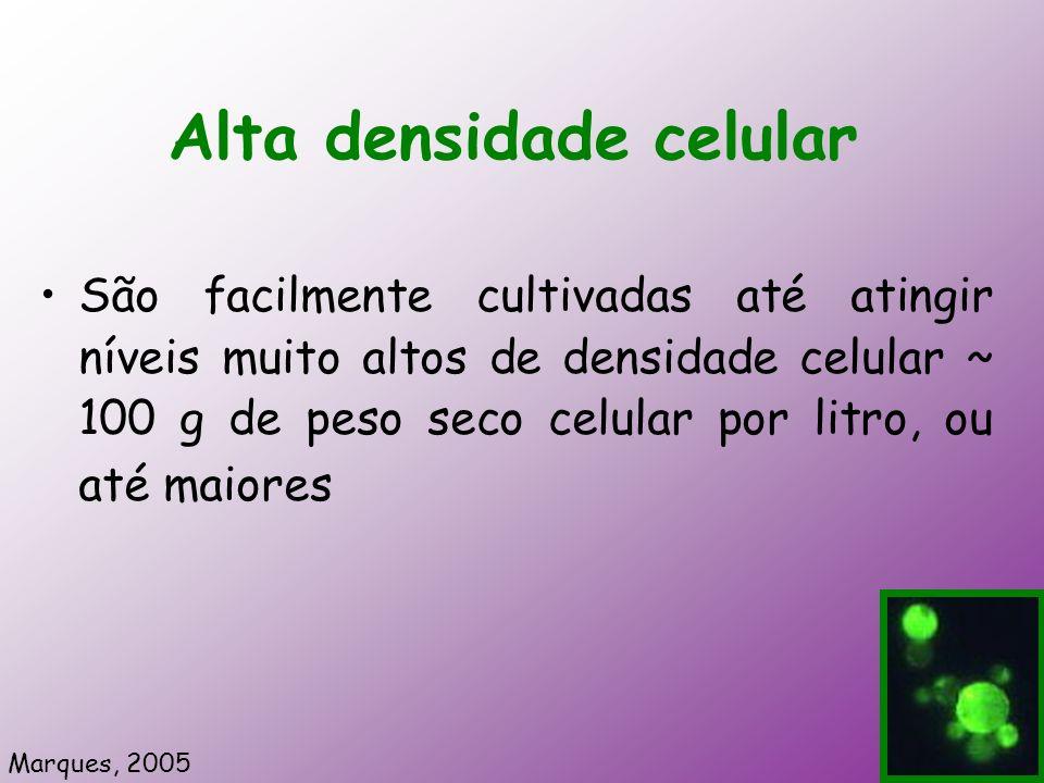 Alta densidade celular