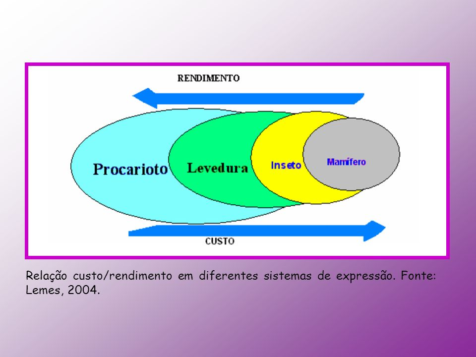 Relação custo/rendimento em diferentes sistemas de expressão