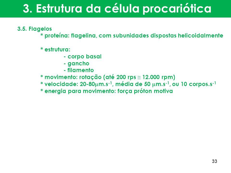 3. Estrutura da célula procariótica