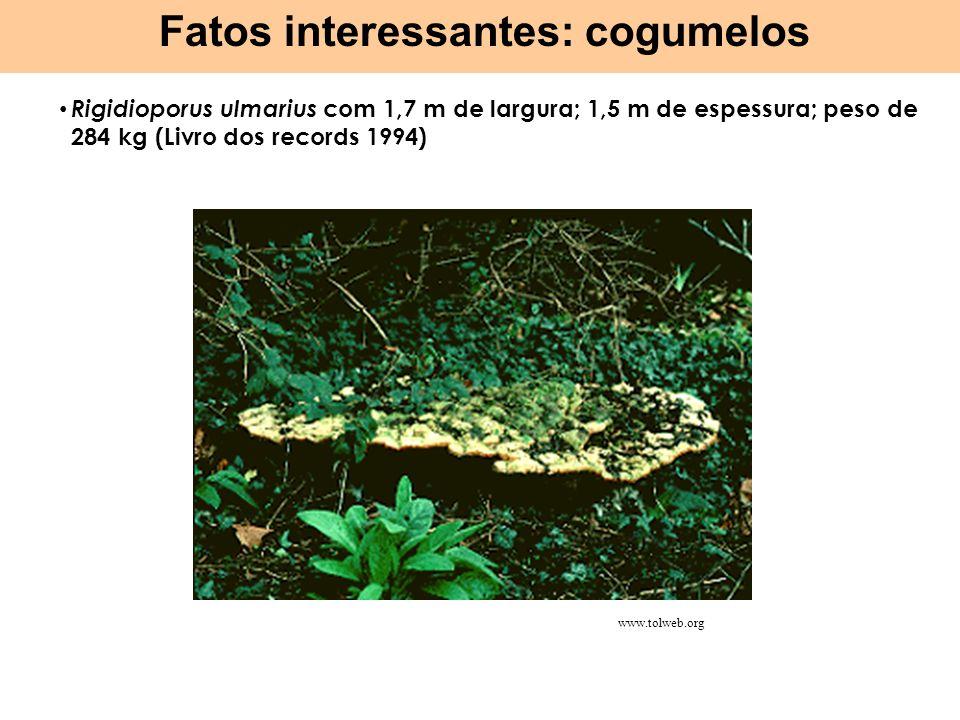 Fatos interessantes: cogumelos