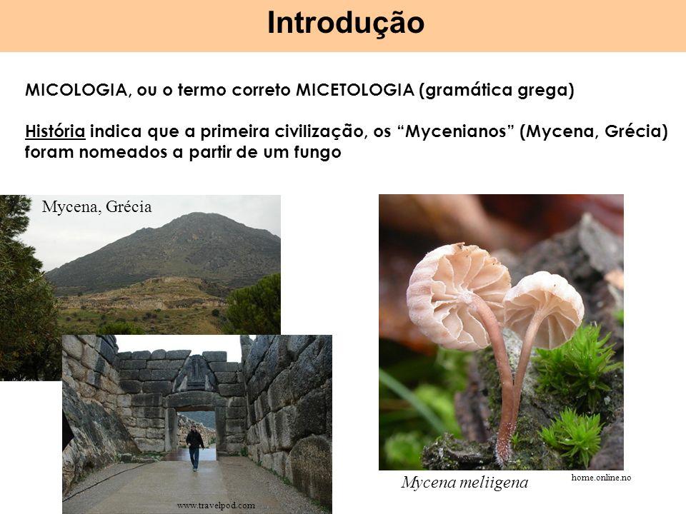 Introdução MICOLOGIA, ou o termo correto MICETOLOGIA (gramática grega)
