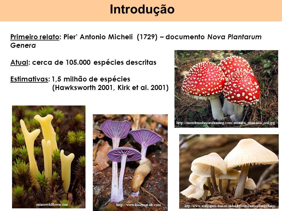 Introdução Primeiro relato: Pier' Antonio Micheli (1729) – documento Nova Plantarum Genera. Atual: cerca de 105.000 espécies descritas.