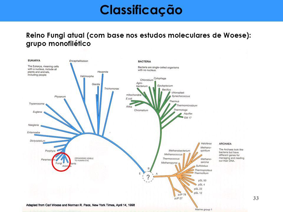 Classificação Reino Fungi atual (com base nos estudos moleculares de Woese): grupo monofilético