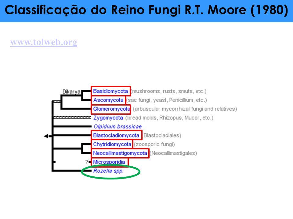 Classificação do Reino Fungi R.T. Moore (1980)