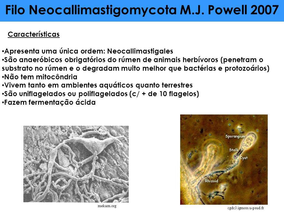 Filo Neocallimastigomycota M.J. Powell 2007