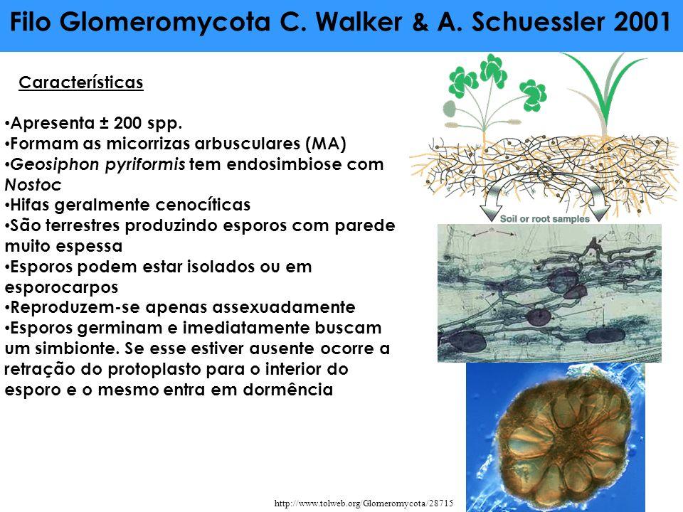 Filo Glomeromycota C. Walker & A. Schuessler 2001