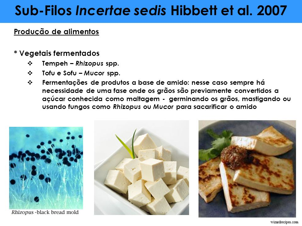 Sub-Filos Incertae sedis Hibbett et al. 2007