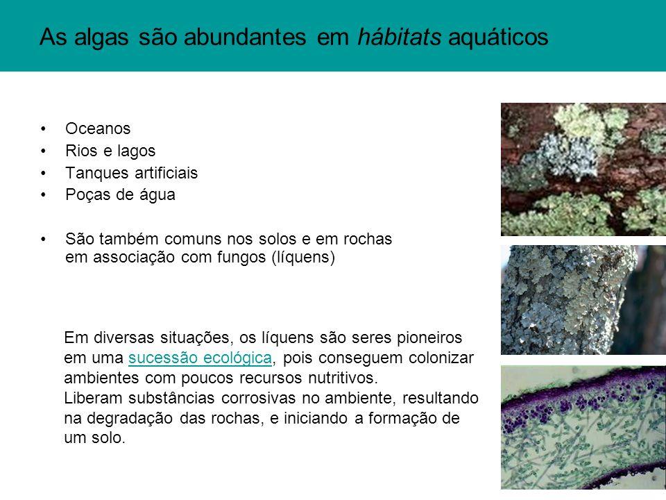 As algas são abundantes em hábitats aquáticos