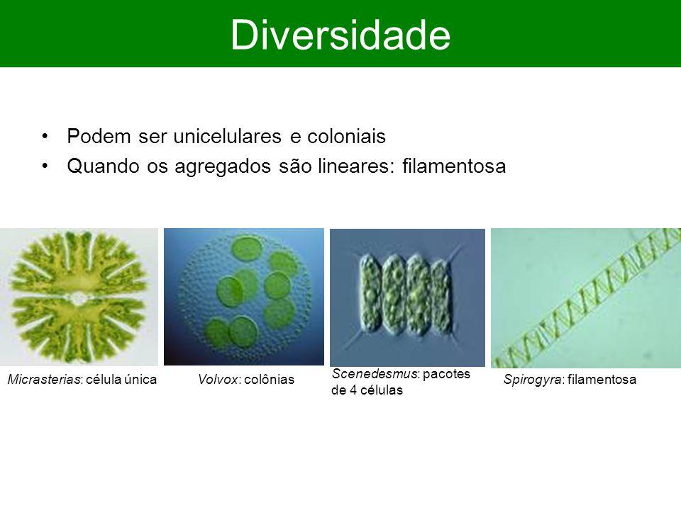Diversidade Podem ser unicelulares e coloniais