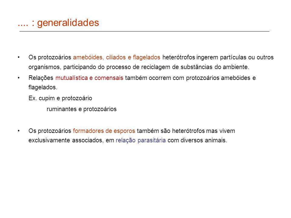 .... : generalidades