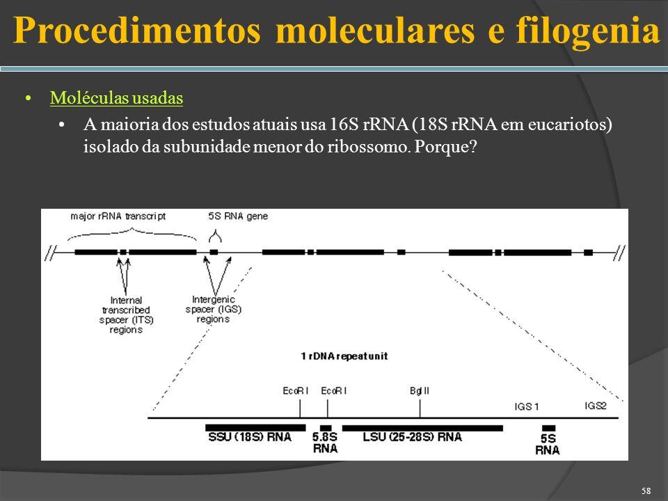 Procedimentos moleculares e filogenia