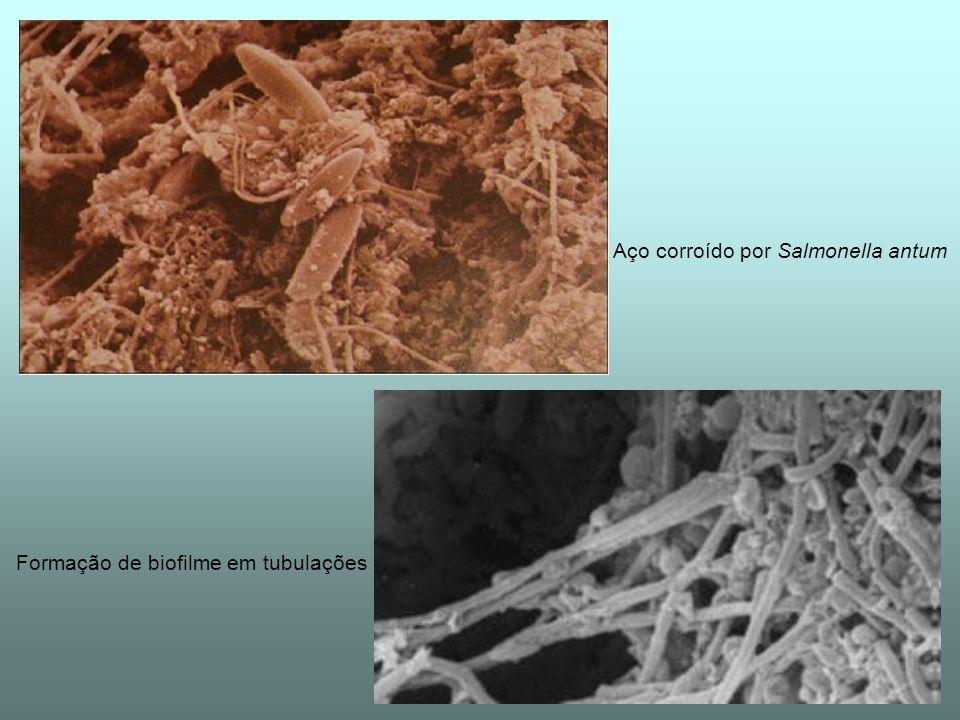 Aço corroído por Salmonella antum