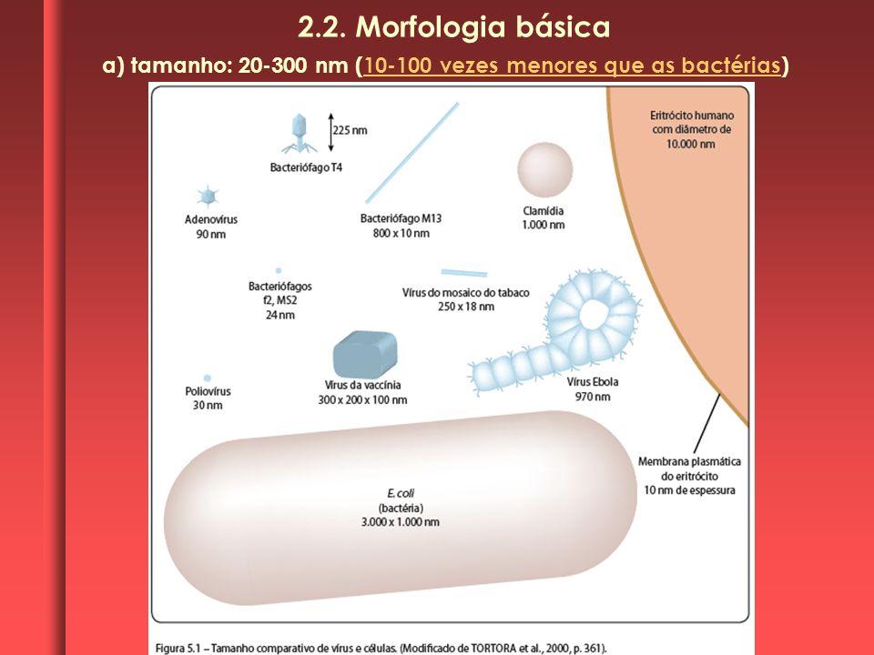 2.2. Morfologia básica a) tamanho: 20-300 nm (10-100 vezes menores que as bactérias)
