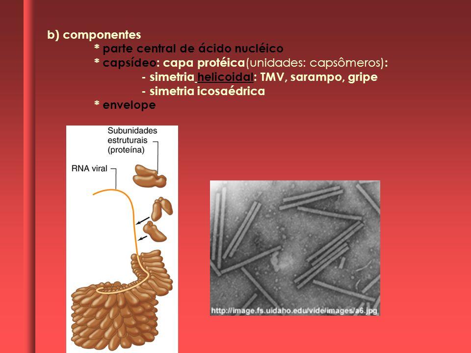 b) componentes * parte central de ácido nucléico. * capsídeo: capa protéica(unidades: capsômeros):