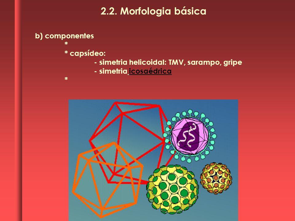 2.2. Morfologia básica b) componentes * * capsídeo: