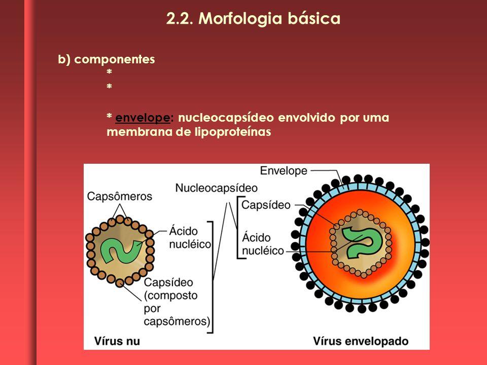2.2. Morfologia básica b) componentes *
